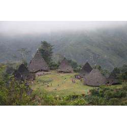 Indonésie Ile de Flores Gulu Pau