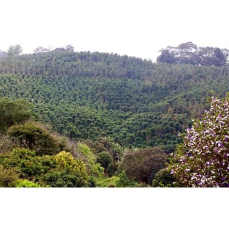Brazil FAF 965 Bob-o-Link Monte Alto